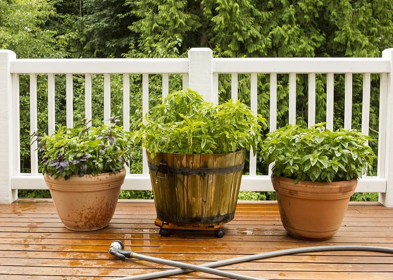 There are many herbs that you can grow to enhance your cooking and save on money.