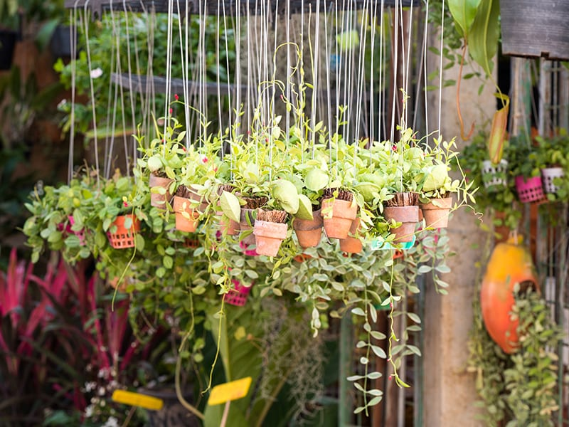 Hanging pots create a beautiful and eye-catching barrier