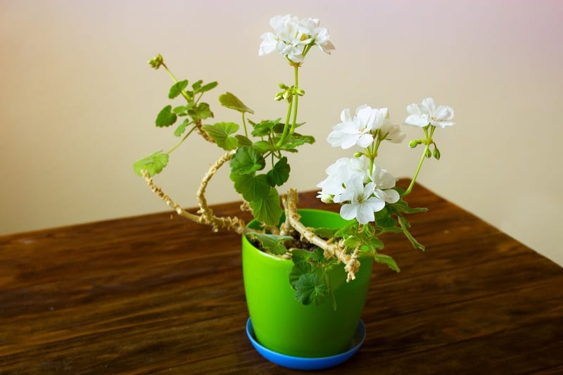 Take this free time to work on your houseplants.