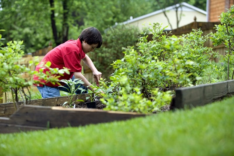 Gardening increases a child's planning and problem-solving skills.