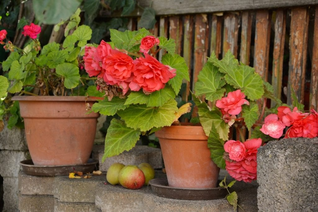 10 Container Plants for Your Patio