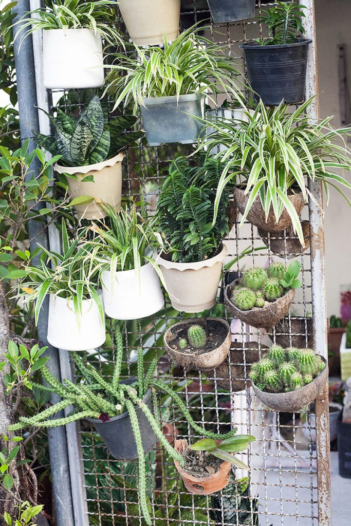 Attaching pots to a vertical surface saves space and creates a beautiful screen