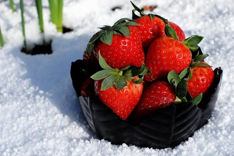 Strawberry plants are naturally cold-hardy. They will survive cold winter temperatures.