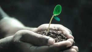 6 Gardening Tips to Minimize Transplant Shock