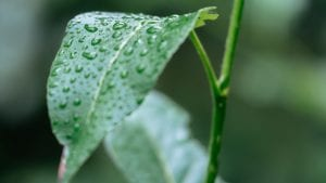 Here's how to check for water-wasters in your garden!