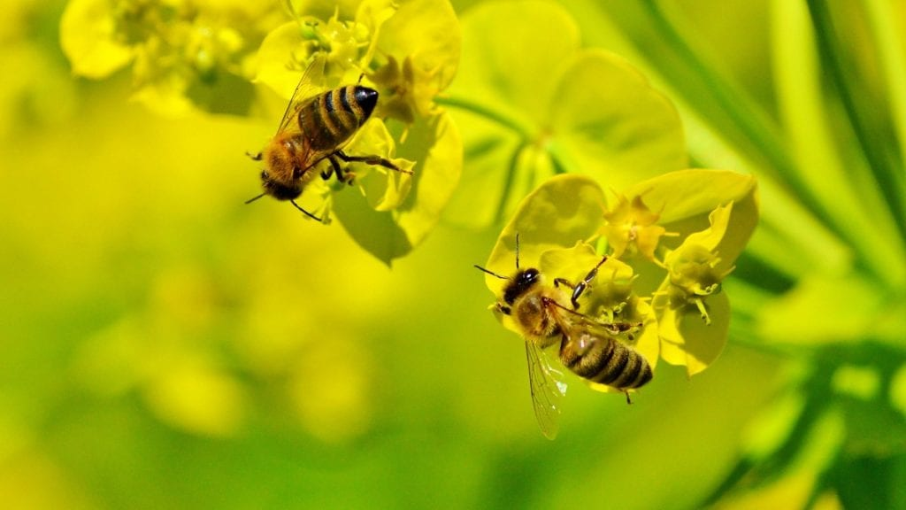 Start a Bee Garden and Help Save Nature's Best Pollinators