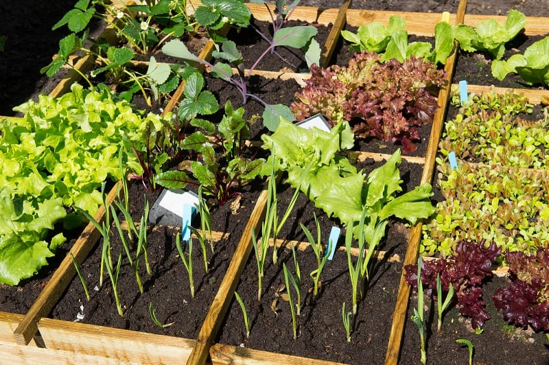 Now is the perfect time to grow your own food.