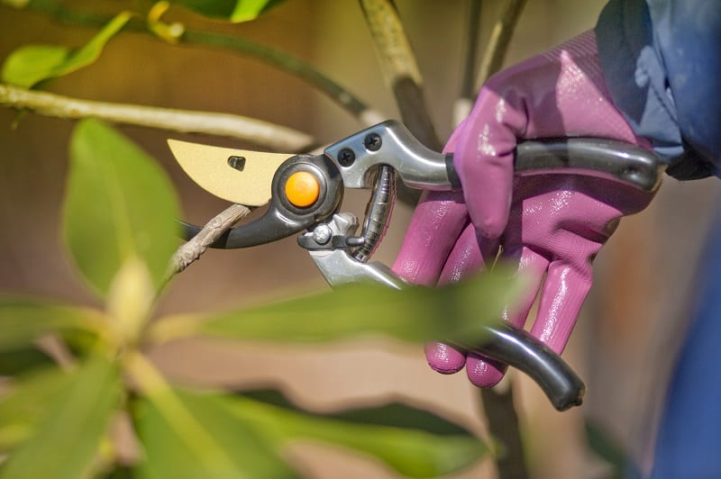 If you have shrubs in your yard, you can start pruning them before they show signs of new growth.