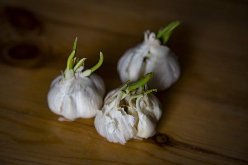 You can easily grow garlic greens indoors or outdoors from garlic cloves you already have in your kitchen.