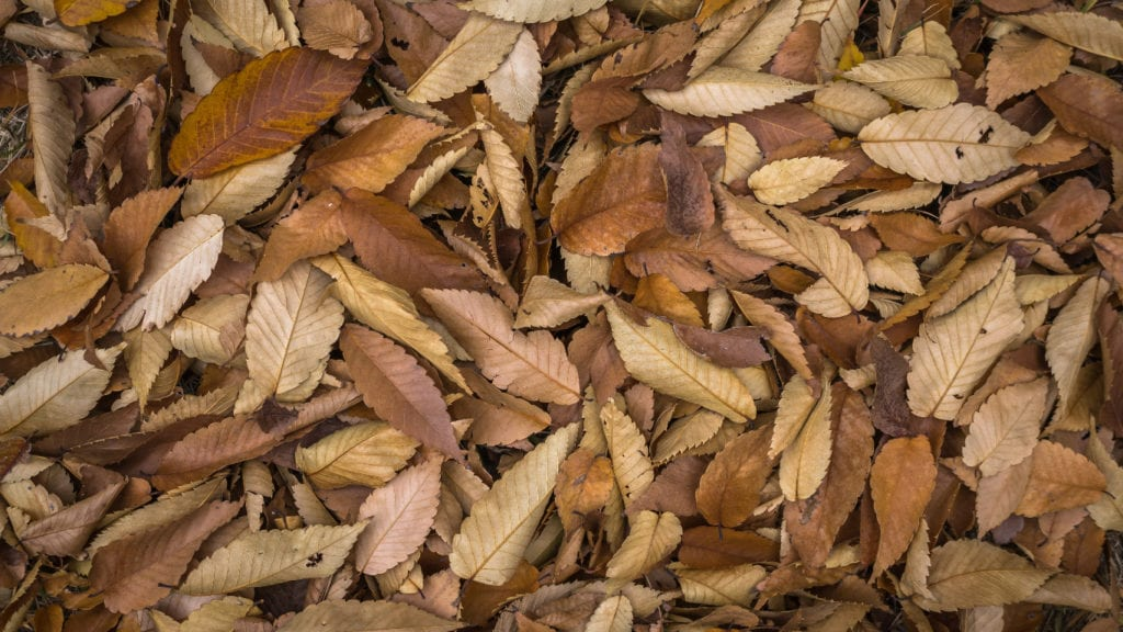 Brown organic materials are usually dry and fluffy - like hay or straw, wood chips, dry leaves, and newspapers.