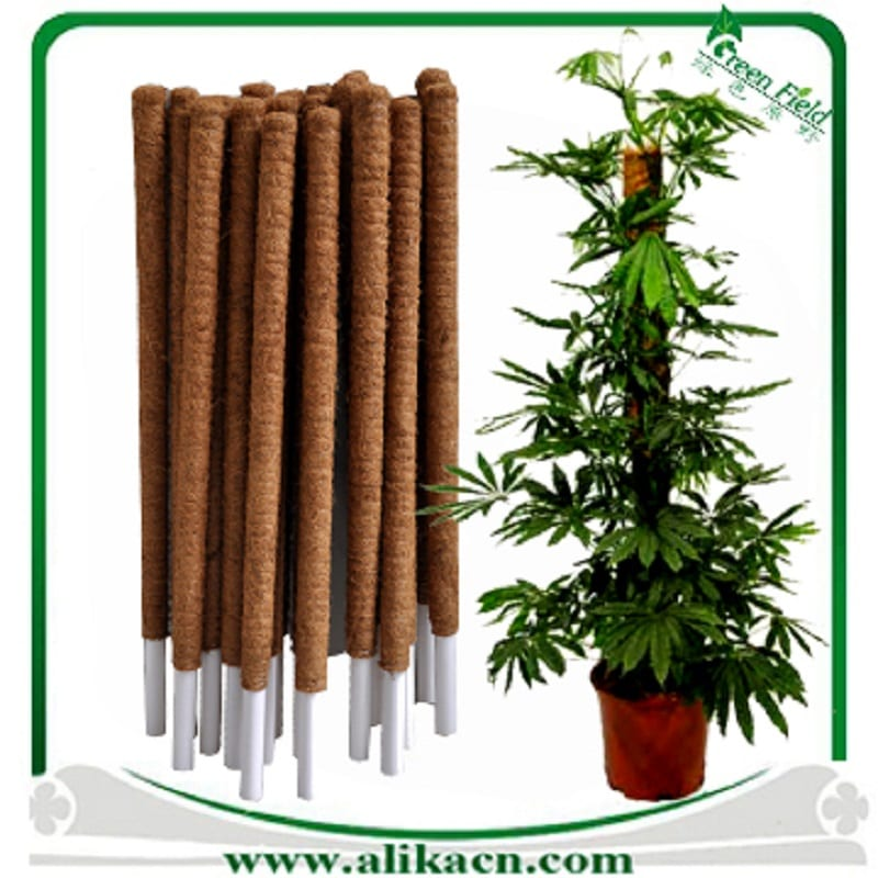 Coir poles are ideal for creepers and vines.