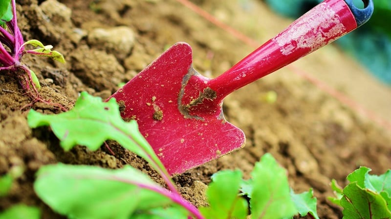 Digging upends the network of microorganisms, insects, worms, and soil layers that keeps soil productive.