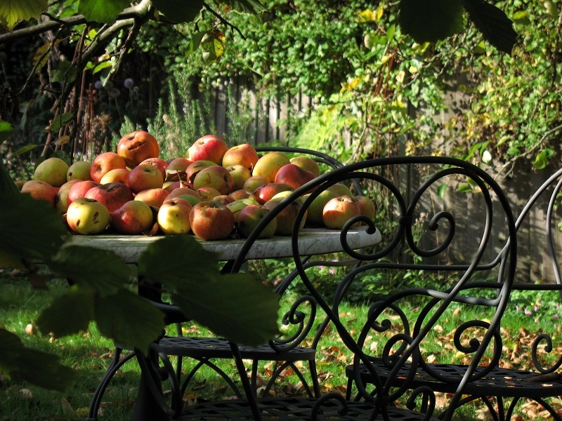 The first step in starting an orchard is to determine the type of fruit, or fruits, you'd like to grow, as well as the specific variety.