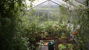 Greenhouses: Which type fits your gardening needs?