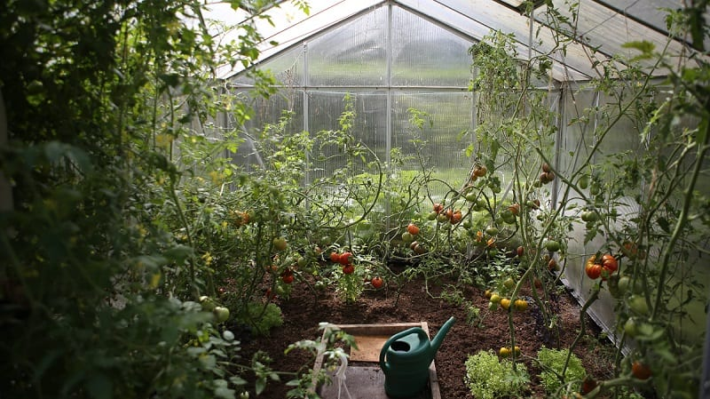 Greenhouses offer great value for any gardener who dreams of extending their growing season.
