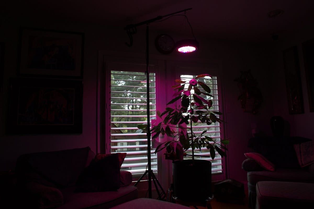 All You Really Need to Know About LED Grow Lights