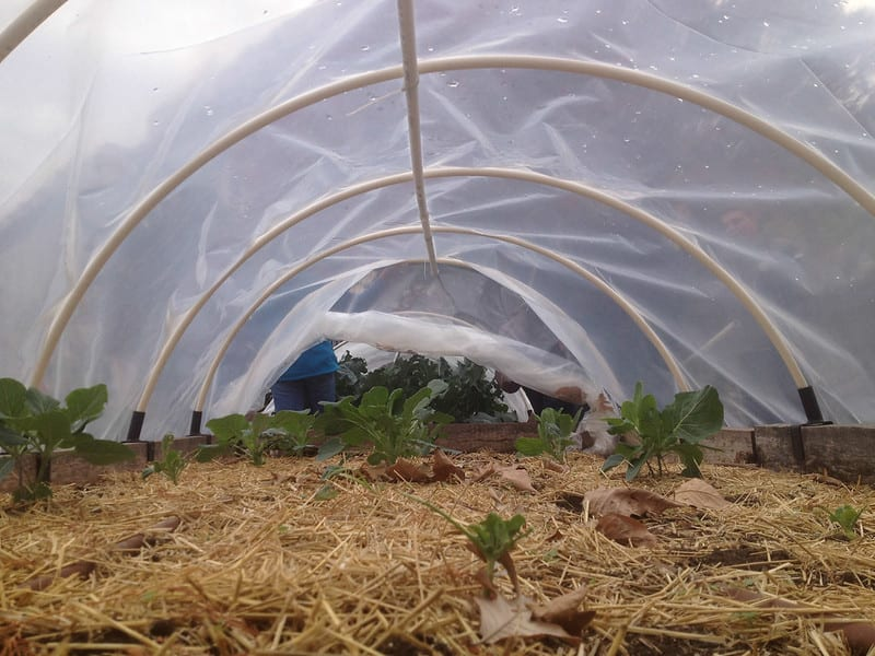 Hoop houses are relatively inexpensive, flexible, and offer excellent lighting for your crops.