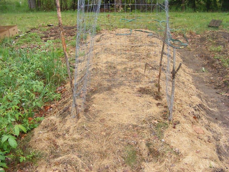 Experienced hügelkultur farmers often use hay, straw, or dried leaves to mulch their beds.