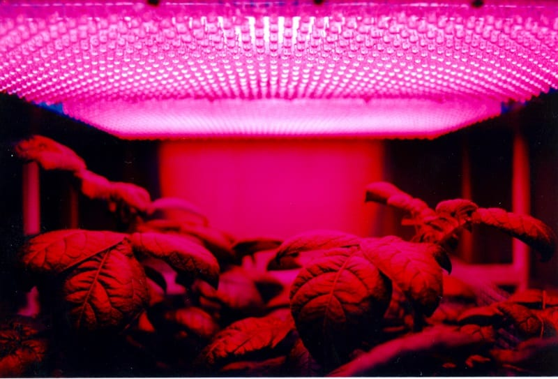 If your goal is simply to produce seedlings, leafy greens, or root crops, you only need higher spectrum bulbs.