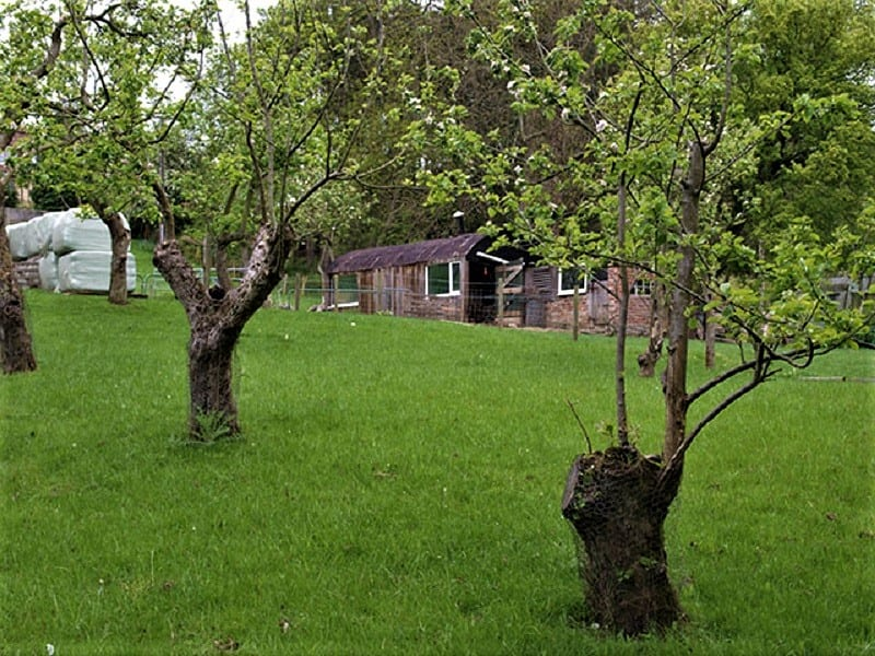 Experienced backyard orchard growers recommend a site that is close to the kitchen.