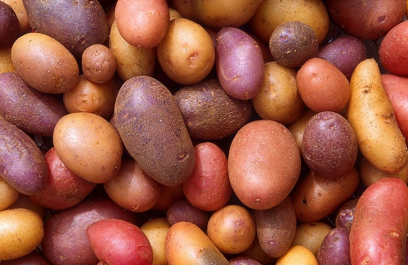 You can grow your own spuds indoors.