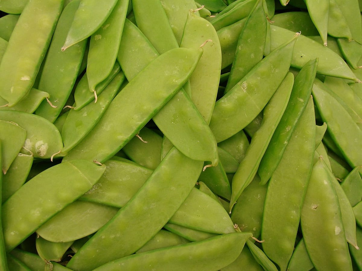 How to Grow Snow Peas in Your Backyard