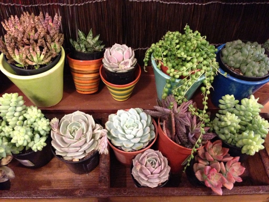 Here's the Proper Way to Water Succulents
