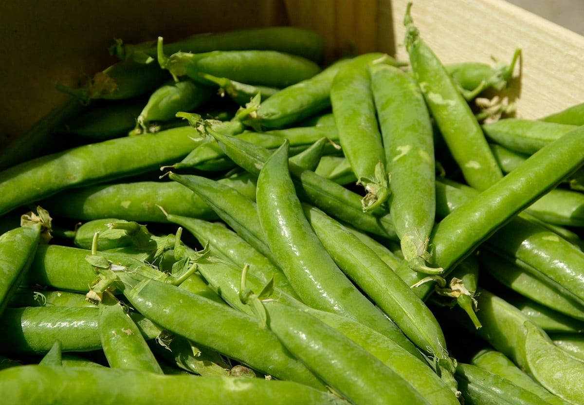 How to Grow Sugar Snap Peas from Seed