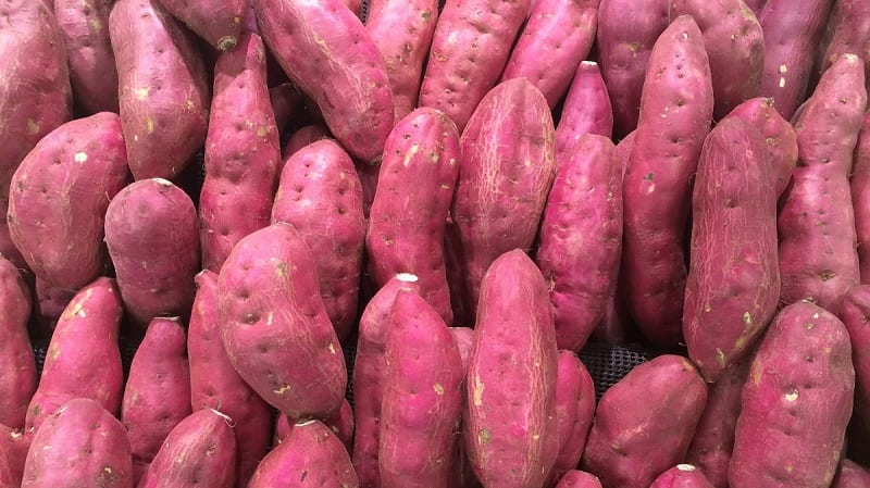 While many associate sweet potatoes with warmer regions, they will grow in just about any garden