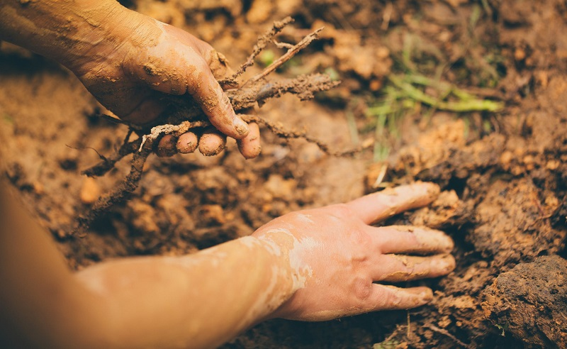 Soil can also become overly dense when the ground is worked in less than ideal conditions.