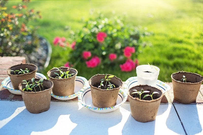 You should start hardening off the seedlings about a week before the planned transplanting .