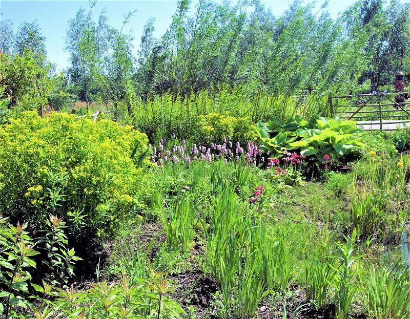 If you have a leaky pond or a perennially wet patch in your backyard, you can convert it into a child-safe bog garden.