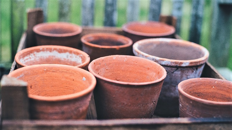 Experts recommend clay pots for growing sage.