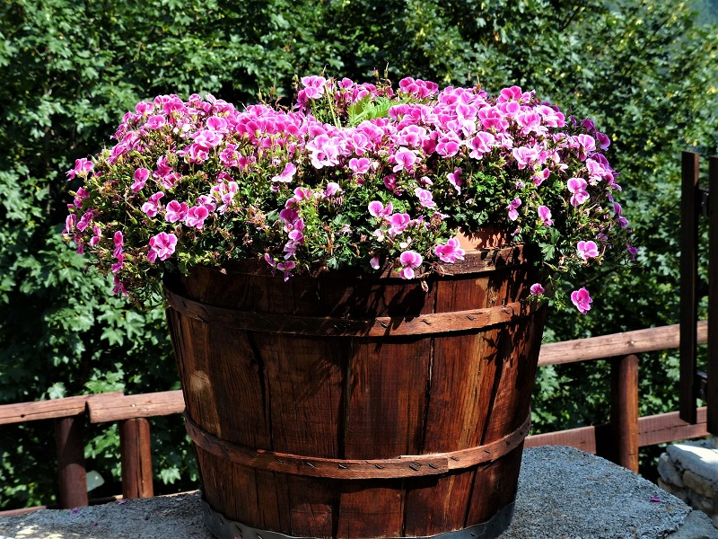 You need to ensure adequate drainage for your container plants.