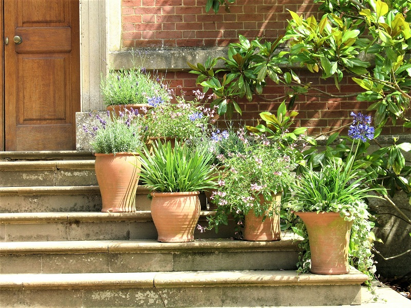If you intend to keep your containers outdoors throughout the year, choose frost-proof terracotta pots.