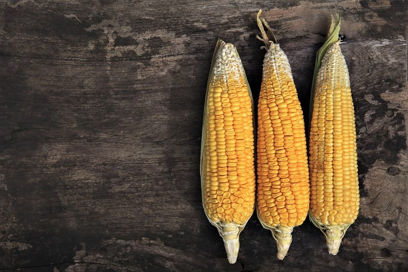 How to Grow Sweet Corn in Your Backyard - The garden!