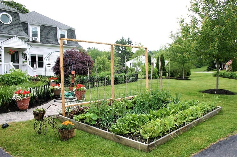 Remember that the vegetables you grow will be on display in your front yard.
