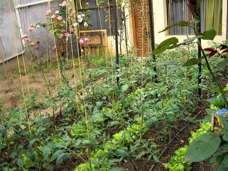 Your front-yard mini-farm will require as much attention and forethought as an ornamental garden.