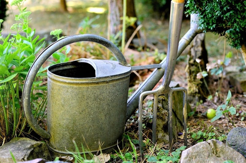 Before you establish the beds, break up and loosen the soil underneath with a garden fork.