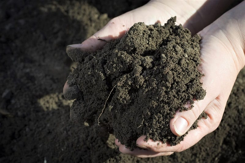 Much of the success of your corn crop will depend on the condition of your soil.