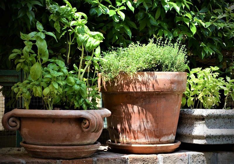 Having potted herbs close at hand while you cook will encourage you to use them often.
