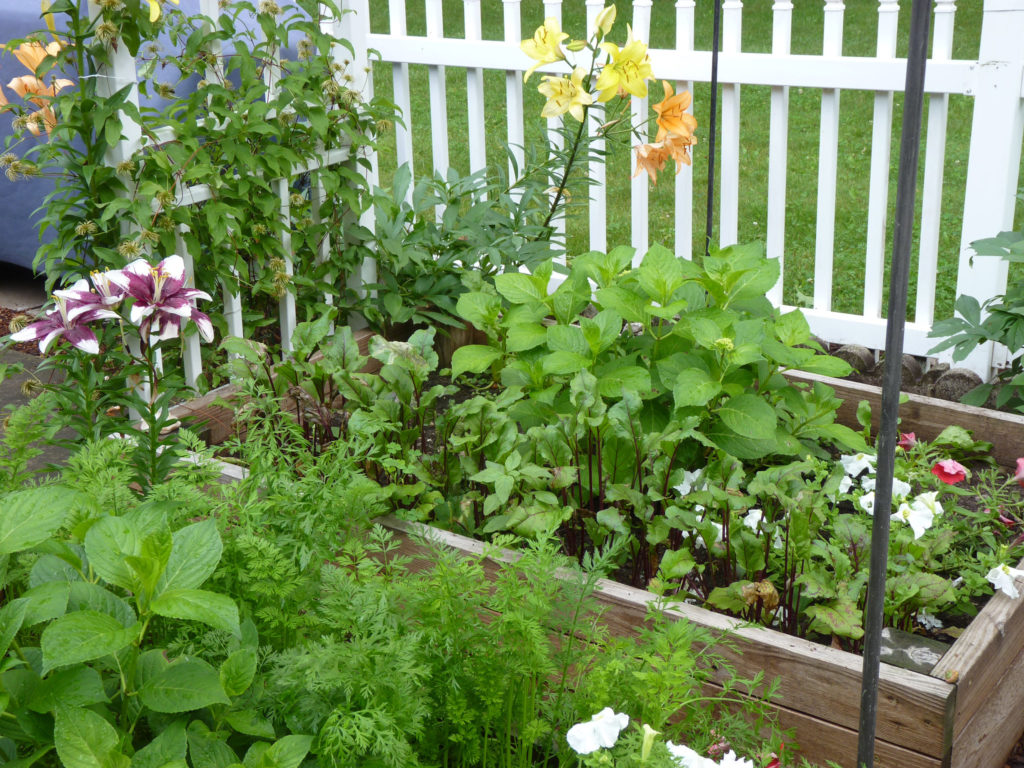 Herbs make great space fillers and companion plants.
