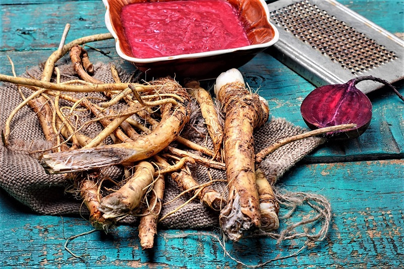 The Romans introduced horseradish to wider Europe as a medicinal herb and flavoring.