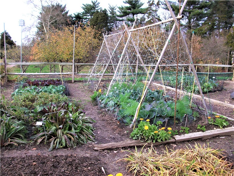 You may also build a garden intercropping strategy around timing and plant maturity.