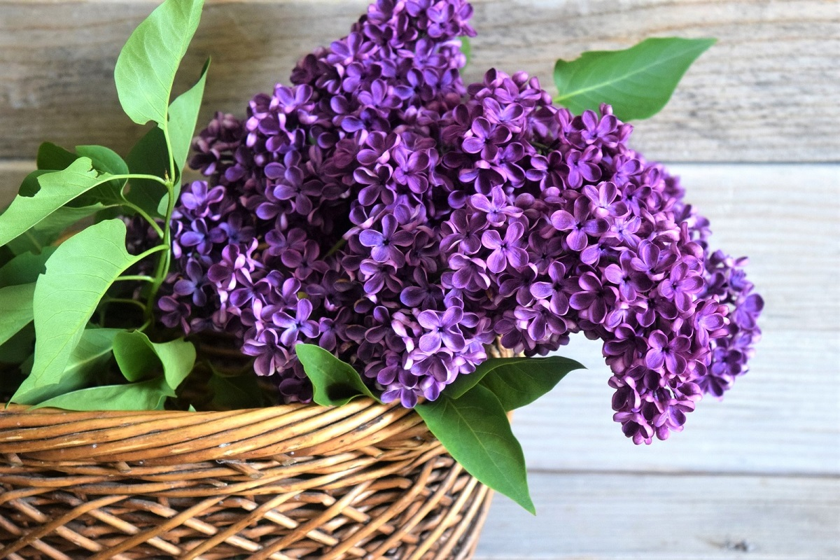 10 Flowers for a Fragrant Garden