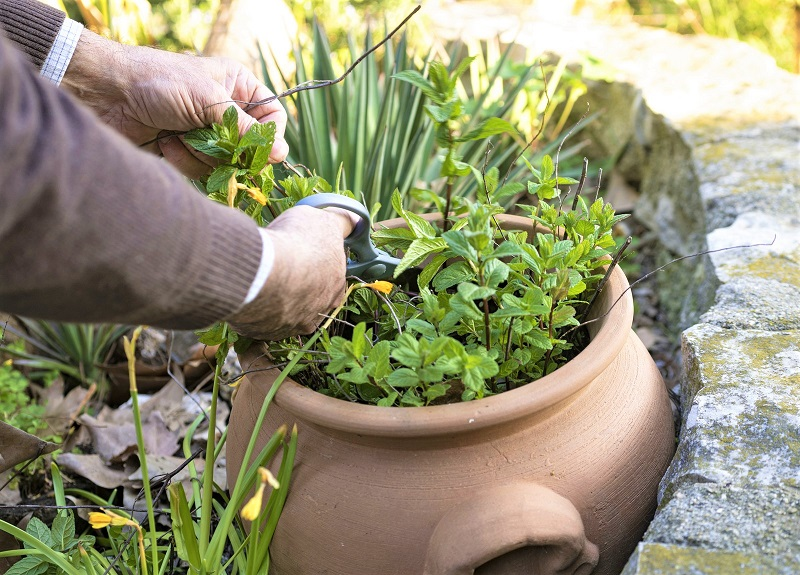If you want to grow the herb outdoors, simply plant mint in a deep bucket and plunge the container into a gap in the soil.