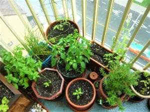 Starting an Organic Vegetable Garden in Containers