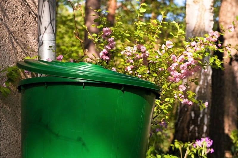 Consider establishing a rainwater barrel close to your raised bed garden.