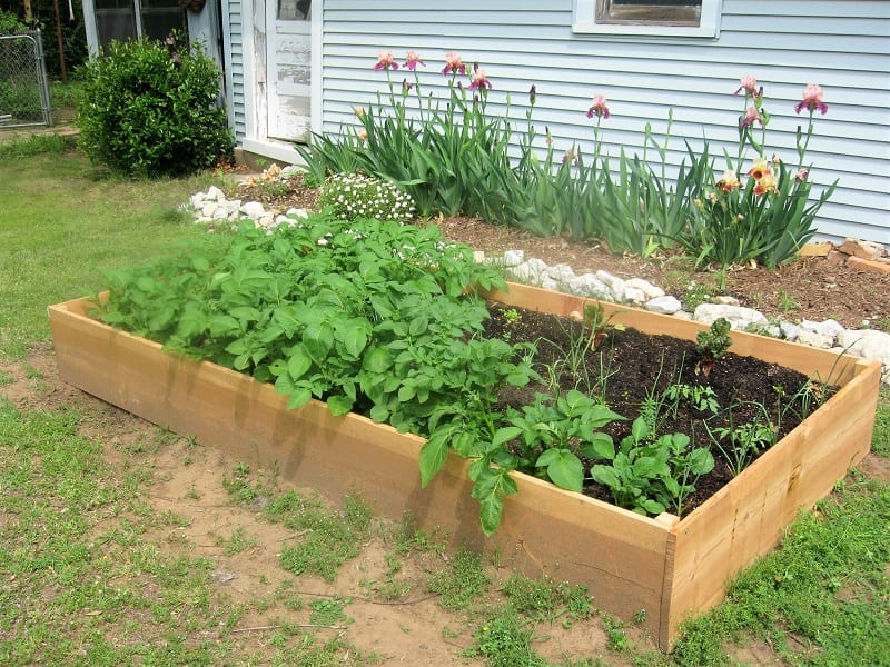 Be sure to position your raised beds in such a way that affords maximum sunlight for your plants.