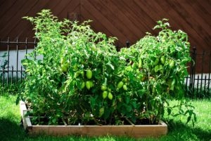 How to Start a Square-Foot Garden